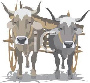 oxen_pulling_a_wooden_slat_cart